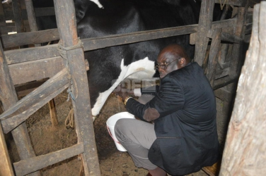 Side hustle: Meet the MP who milks cows during his free time