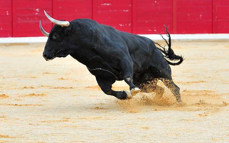 500kg bull stomps man to death during bull-running festival