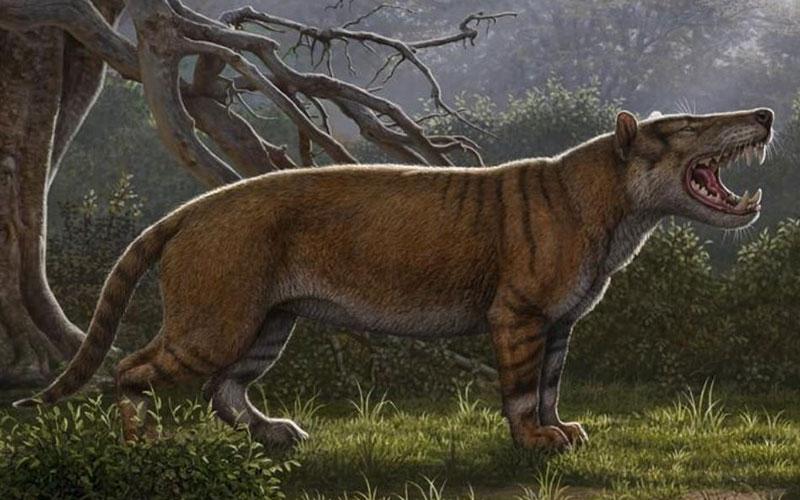 Fossils of biggest ever 'lion' discovered in Kenya