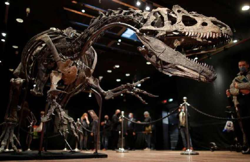 Dinosaur skeleton dug up in Wyoming fetches Sh382 million at auction