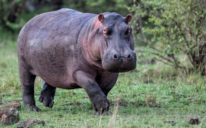 Fisherman drowns in Lake Naivasha fleeing hippo