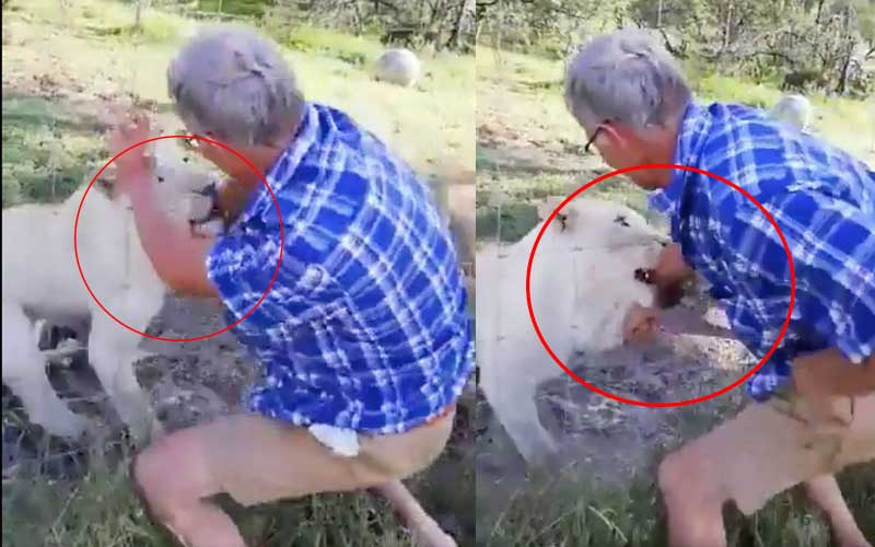 Man punches lioness, saves tourist from being mauled