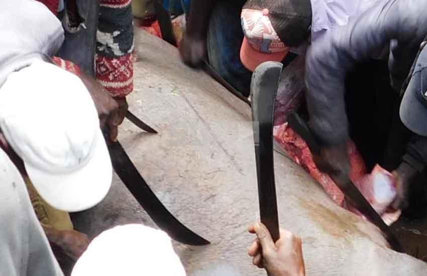 KWS hands Nyandarua residents rare feast, tear stray hippo apart